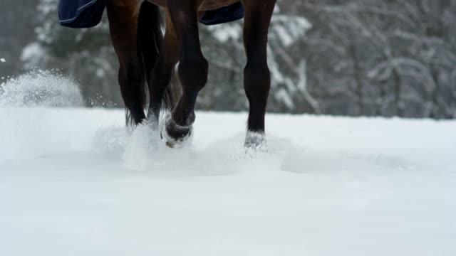 SLOW MOTION: Dark horse running in deep snow in beautiful winter wonderland video