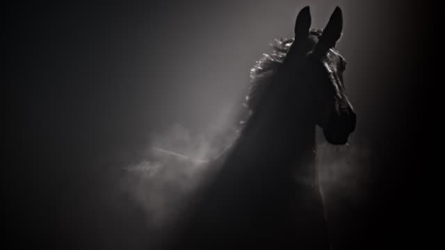 slo mo ts mörk häst som springer i dimmig natt - racehorse track bildbanksvideor och videomaterial från bakom kulisserna