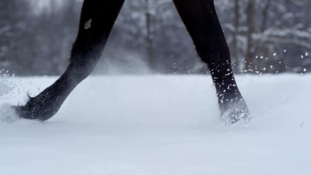 SLOW MOTION: Dark horse running though deep snow splashing snowflakes in winter video