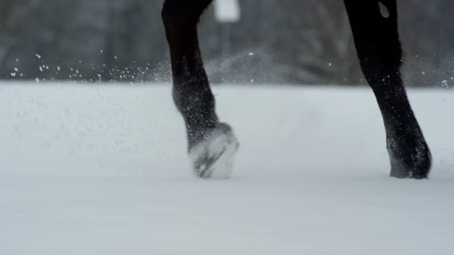 SLOW MOTION: Dark horse walking in deep snow in beautiful winter wonderland video