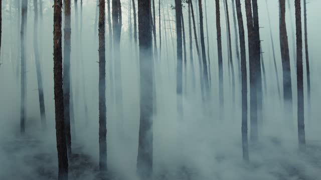 vídeos de stock e filmes b-roll de dark mysterious burned forest landscape, smoke rising from ground after wildfire. - apocalipse