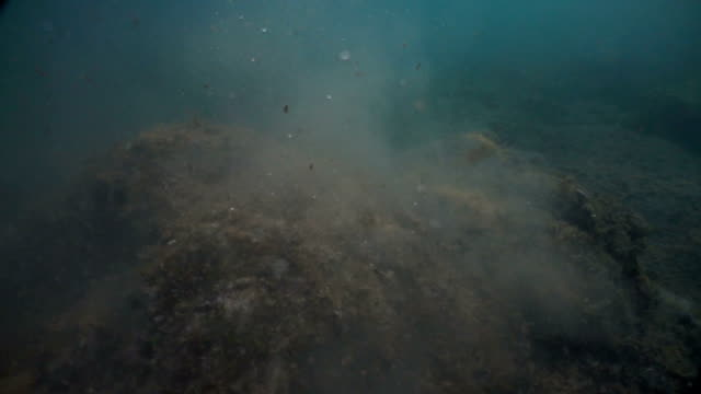 Dark seabed. Underwater particles of dust and water. Agitated and dusty seabed. Particles in movement. Underwater view of the agitated seabed. SlowMotion. Moving particles in water.Beaufitul colours and very mysterious atmosphere. ocean floor stock videos & royalty-free footage