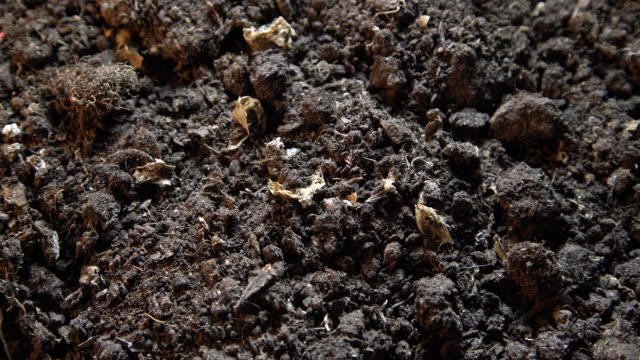 Dark texture of black dirt ground. Top view of black earth surface, agriculture background