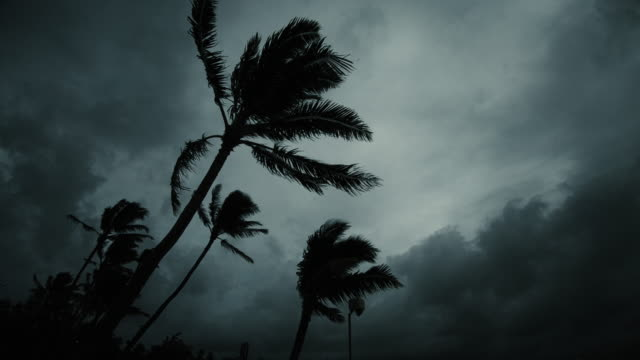 dark tropical evening stormy sihouette palm trees and clouds - uragano video stock e b–roll