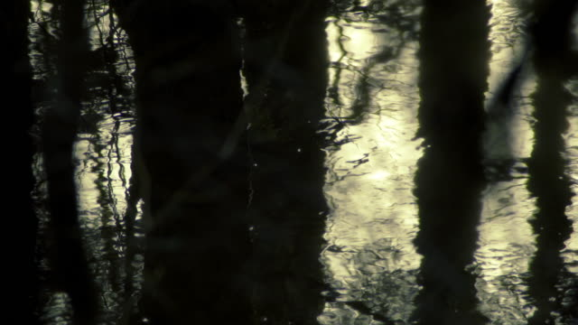 Dark water in the forest video