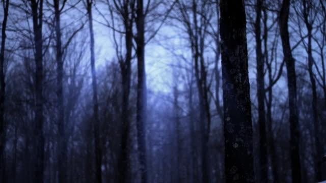 Dark winter forest Loop