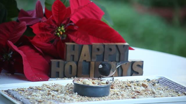 dark-eyed junco happy holidays video