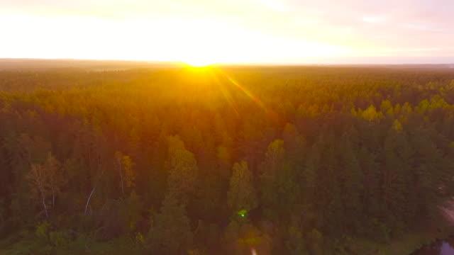 가을 새벽. 공중 볼 수 있습니다. 플 라 잉 숲 나무와 강입니다. - 무인항공기 스톡 비디오 및 b-롤 화면