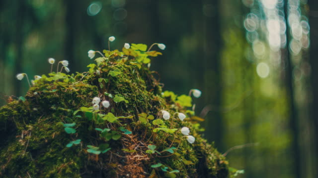vídeos de stock e filmes b-roll de dawn in the forest time lapse - ambiente vegetal