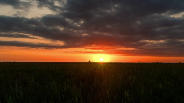 dawn in the steppe time lapse sunrise on wheat field time lapse, sunrise in prairie, sunrise over field, morning sun over the field horizon over land stock videos & royalty-free footage