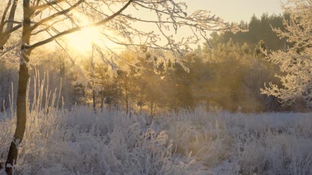 dawn in the winter forest, hoarfrost on the grass - badawczy statek kosmiczny filmów i materiałów b-roll