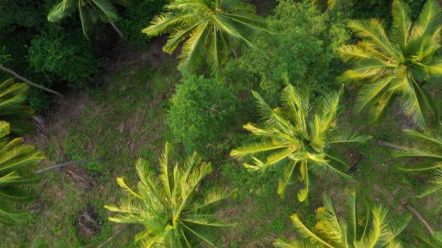ヤシの木立の風景上空トップダウンパノラマ4kタイ上の昼間サムイ島飛行 - サムイ島点の映像素材/bロール