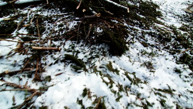 Ddead Snowy Ground after Clearcut video