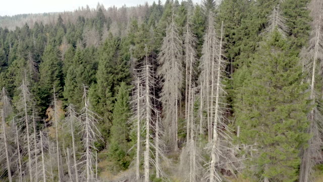 dead and dying forest caused by the bark beetle aerial view - жук стоковые видео и кадры b-roll
