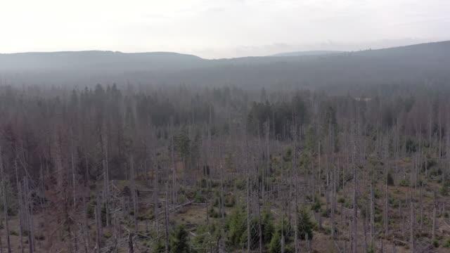 kabukları böcek havadan görünümü tarafından neden ölü ve ölmek üzere olan orman - ölü stok videoları ve detay görüntü çekimi