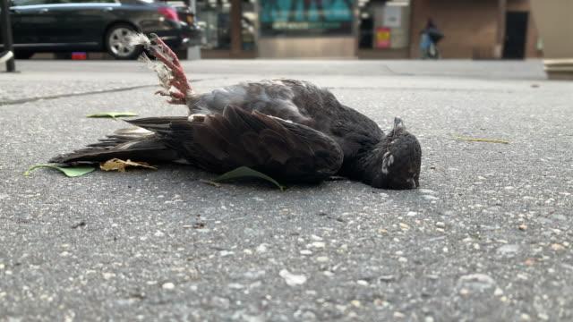 stockvideo's en b-roll-footage met dode vogel face-up op de grond in de stad - dood dier