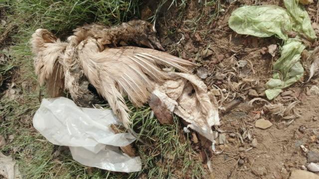 Toter Vogel mit Plastikverschmutzung im Magen – Video