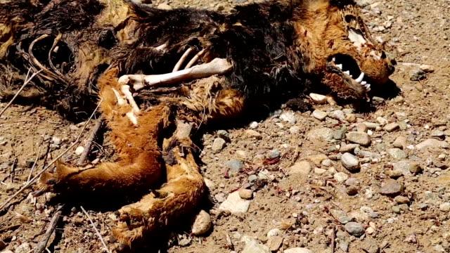dead hund - verfault stock-videos und b-roll-filmmaterial