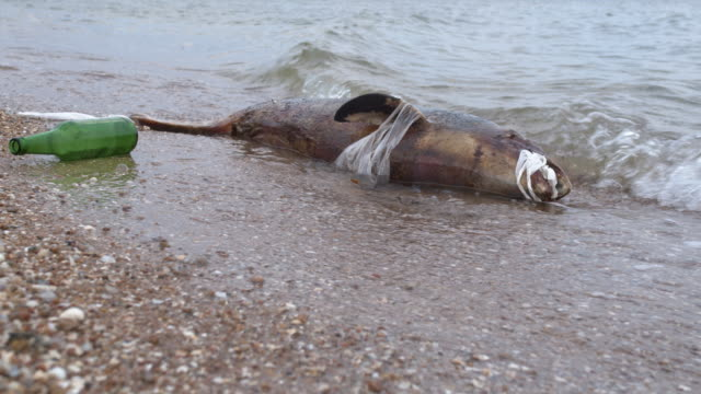 Dead dolphin at Polluted Waters . Sea pollution toxic plastic garbage