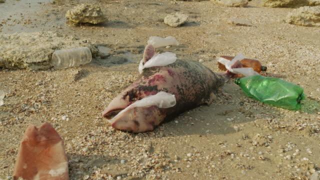 Dode dolfijn. Ecologische catastrofes zichtbaar worden over de hele aarde miljoenen zeedieren sterven als gevolg van vergiftiging van plastic afval en menselijk afval als gevolg van een milieuramp video