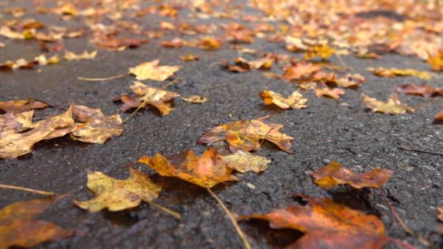 close up: toten gefallen baumblätter verlegung auf nasser fahrbahn nach regen im spätherbst - nass stock-videos und b-roll-filmmaterial