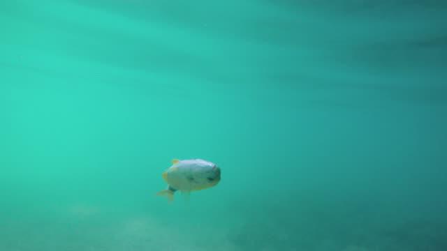 Dead fish in the Adriatic sea video