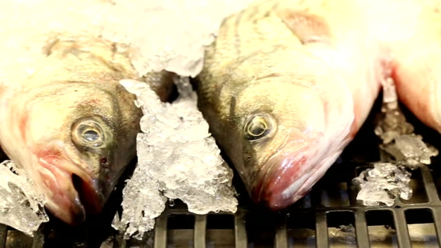 Dead Fish on Ice in a Fish Shop in the Market video