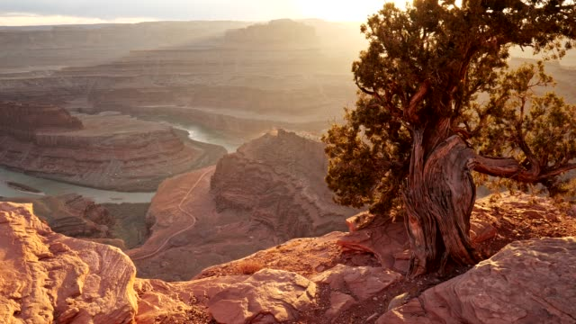 Dead Horse Point State Park, USA. Walking the edge of a cliff. Sun beams getting through branches of evergreen tree. View on red rocks and Horseshoe Bend. 4K