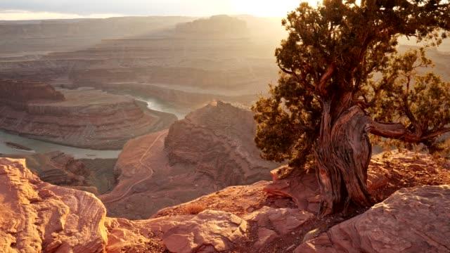 dead horse point state park, usa. gå på kanten av en klippa. solstrålar kommer genom grenar av vintergröna träd. utsikt över röda stenar och horseshoe bend. 4k (4k) - stenstorlek bildbanksvideor och videomaterial från bakom kulisserna