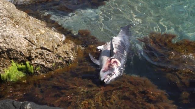 Dead little Dolphin on the ocean coast Dead little Dolphin on the ocean coast dead animal stock videos & royalty-free footage