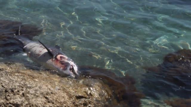 stockvideo's en b-roll-footage met dead little dolphin wassen - dood dier
