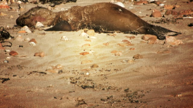 Dead Sea Lion Pup video