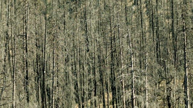 alberi morti  - brent video stock e b–roll