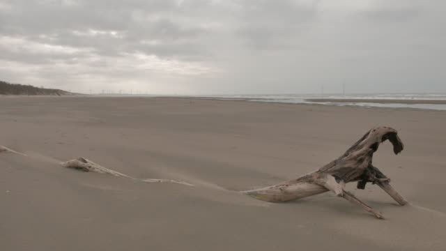 Dead wood covered by blowing sand in beach video