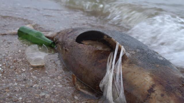 Dode jonge dolfijn aan de kust. Aard fauna, milieuvervuiling, ecologische catastrofe. Dode dier video