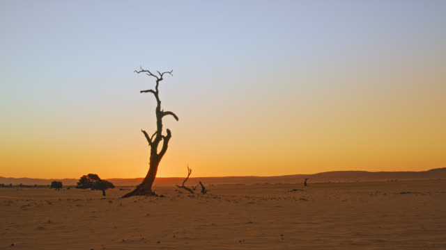 WS Deadvlei tree in vast tranquil desert at sunset,Namibia,Africa