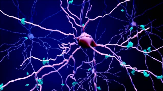vidéos et rushes de décès des neurones dans le cerveau vieillissant ou protéines dans les neurones - protéine