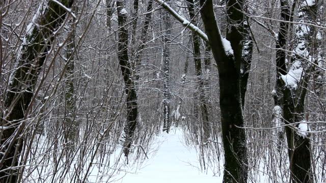 laubwald im schnee. - laub winter stock-videos und b-roll-filmmaterial