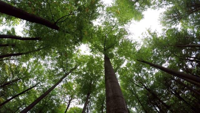 yaprak döken orman, yaprakları çatı, yeşil orman, spessart, sonbahar, 4k - kubbe stok videoları ve detay görüntü çekimi