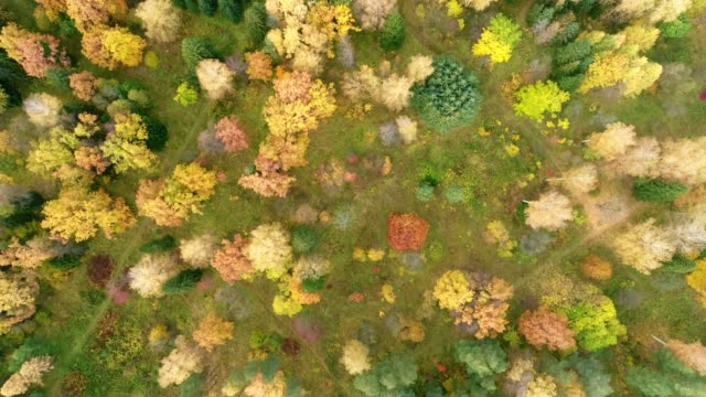 Deciduous recreation park in bright autumn colors. Scenic landscape, aerial view video