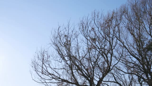 deciduous tree - albero spoglio video stock e b–roll