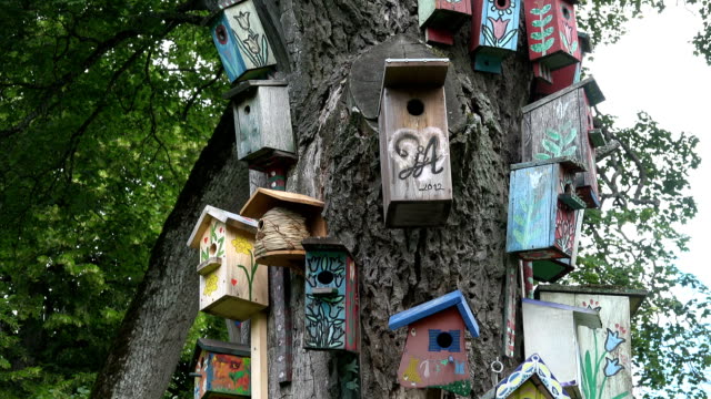 decorated bird nesting boxes houses hang old dead tree trunk in park video