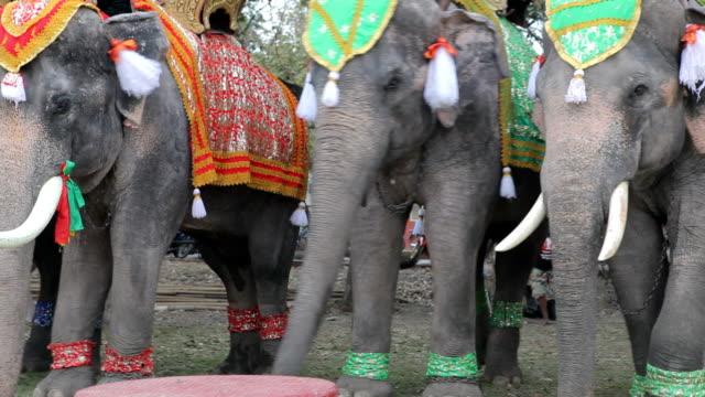 vídeos de stock, filmes e b-roll de decoração elefante com o anual festival de elefante - ano novo budista