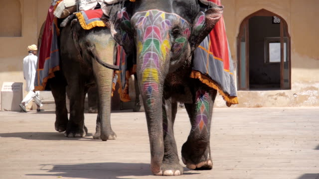 stockvideo's en b-roll-footage met olifanten in amber fort jaipur-india ingericht - ornaat