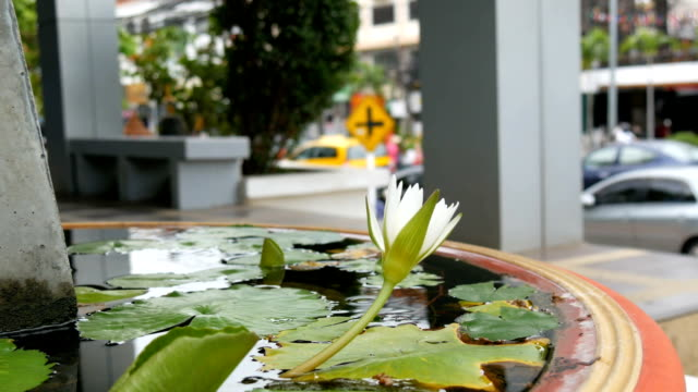 Decorative garden lily in artificial pond. Beautiful white decorative flower in a small artificial reservoir