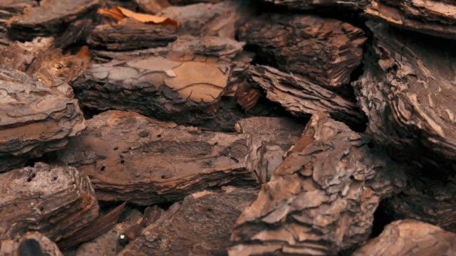 美しい茶色の自然な松の樹皮の助けを借りて、庭や庭で花壇の装飾的なマルチリング。ステディカムでマクロショット。 - 花壇点の映像素材/bロール