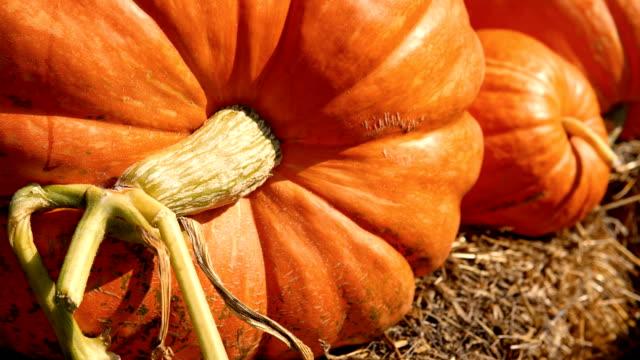 decorative pumpkins on display on farmers market for halloween - zucca legenaria video stock e b–roll