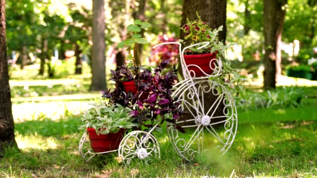 Decorative vintage garden bicycle. flower bed in the park, decorated with a composition in the form of a metal bicycle with a flower pots. summer sunny day in a park