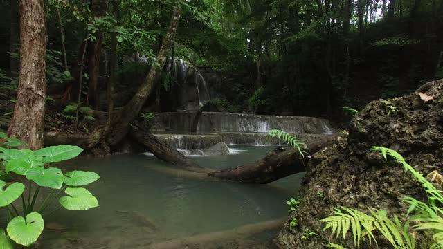 derin orman yeşil kanyonu - ultra yüksek çözünürlüklü televizon stok videoları ve detay görüntü çekimi