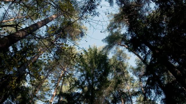 deep green forest, green woods - хвойное дерево стоковые видео и кадры b-roll
